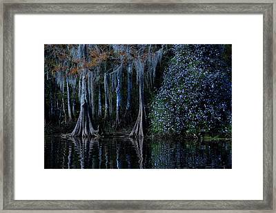 Fisheating Creek 01 Framed Print by Carol Kay