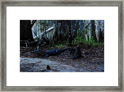 Fisheating Creek 02 Framed Print by Carol Kay