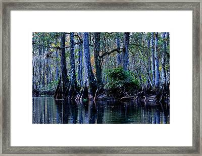 Fisheating Creek 04 Framed Print by Carol Kay