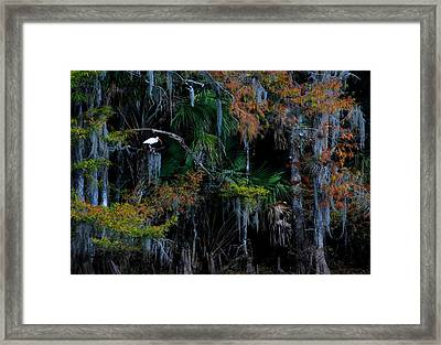 Fisheating Creek 05 Framed Print by Carol Kay