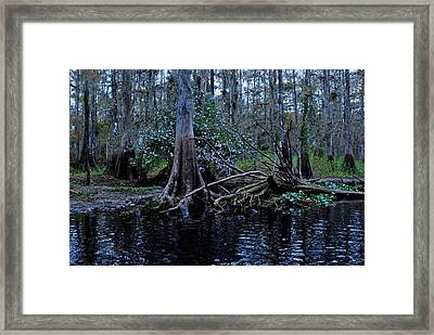 Fisheating Creek 15 Framed Print by Carol Kay
