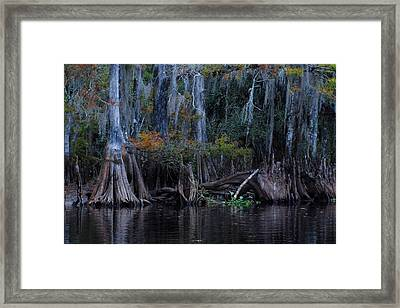 Fisheating Creek 19 Framed Print by Carol Kay