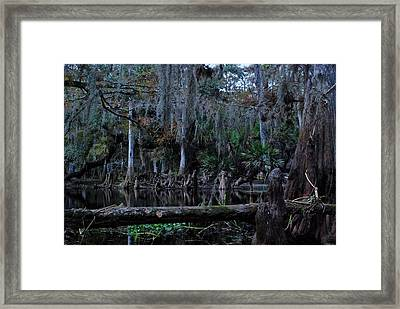 Fisheating Creek 21 Framed Print by Carol Kay