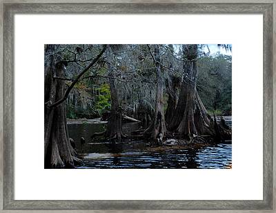 Fisheating Creek 22 Framed Print by Carol Kay