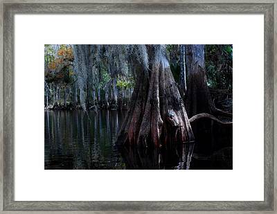 Fisheating Creek 23 Framed Print by Carol Kay