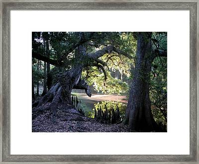 Fisheating Creek Dawn Framed Print by Carol Kay