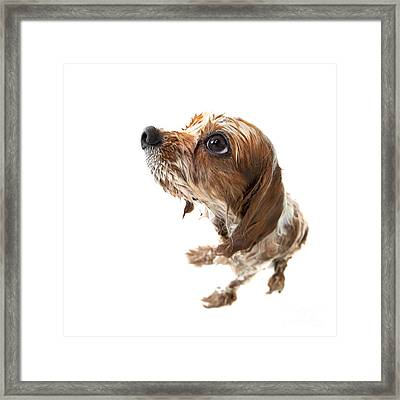 Fisheye Wet Archie Framed Print by Jane Rix