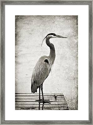 Fishing From The Dock Framed Print by Scott Pellegrin