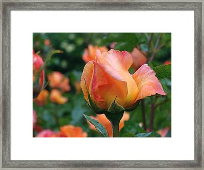 Fit For A Queen Framed Print by Rona Black