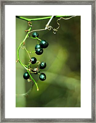 Five And Country Framed Print by Rebecca Sherman