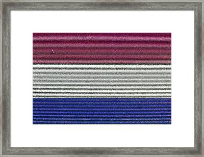 Flag Hyacinths, Lisse Framed Print by Bram van de Biezen