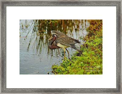 Flair For Fishing Framed Print by Lynda Dawson-Youngclaus