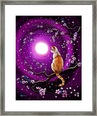 Flame Point Siamese Cat In Dancing Cherry Blossoms Framed Print by Laura Iverson