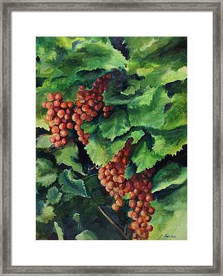 Flames In The Vineyard Framed Print by Maria Hunt