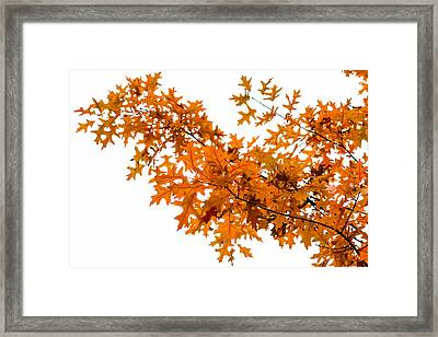 Flames Of The Season - Featured 3 Framed Print by Alexander Senin