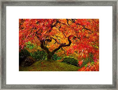 Flaming Maple Framed Print by Darren  White