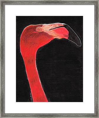 Flamingo Art By Sharon Cummings Framed Print by Sharon Cummings
