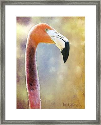 Flamingo Framed Print by Barbara Orenya