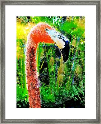 Flamingo Framed Print by David Blank