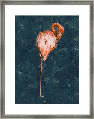 Flamingo - Happened At The Zoo Framed Print by Jack Zulli