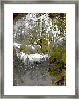 Flamingo Framed Print by Kelly McManus