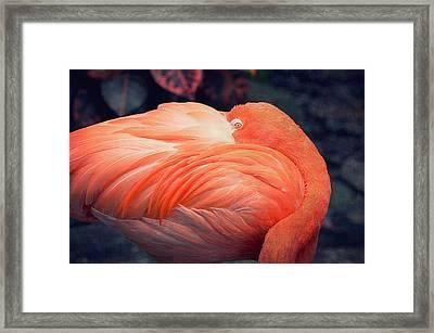 Flamingo Framed Print by Maria Angelica Maira