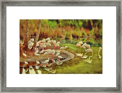 Flamingo Pond Framed Print by Kathy Jennings
