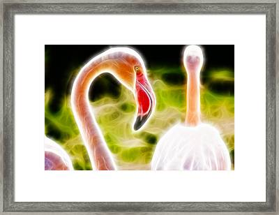 Flamingo Portait Fractal Framed Print by Pati Photography