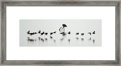 Flamingos In A Lake, Lake Manyara Framed Print by Panoramic Images