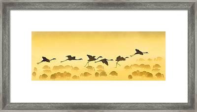 Flamingos Landing, Kenya Framed Print by Panoramic Images