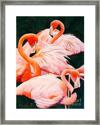 Flamingos Framed Print by Robert Hooper