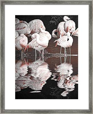 Flamingos Framed Print by Sharon Lisa Clarke