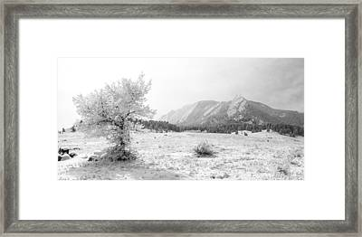Flatirons Tree - Winter Framed Print by Aaron Spong