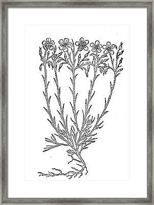 Flax, 1597 Framed Print by Granger