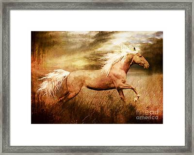 Fleet Framed Print by Shanina Conway