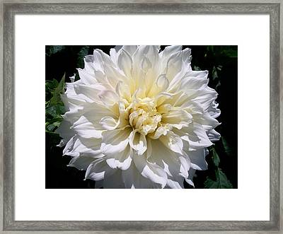 Fleurel Dahlia Framed Print by Sharon Duguay