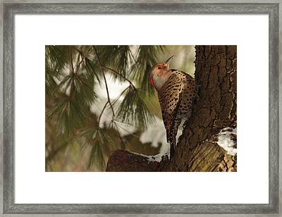 Flicker Framed Print by Everet Regal