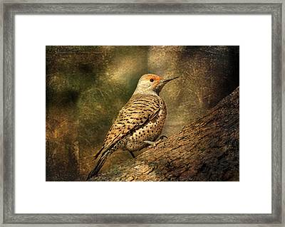 Flicker In A Tree Framed Print by Donna Kennedy