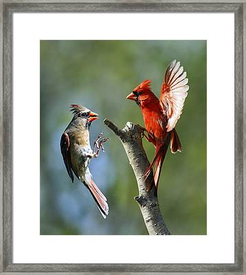 Flight Fancy Framed Print by David Lester