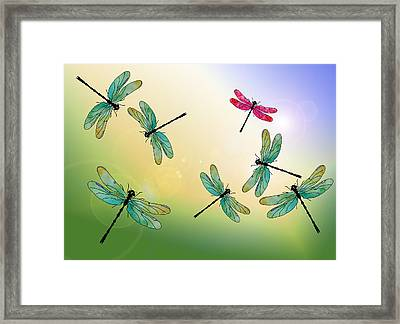Flight Of The Scarlet Lady Framed Print by Jenny Armitage