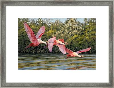 Flight Framed Print by Don  Ray