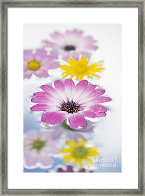 Floating Flowers Framed Print by Tim Gainey