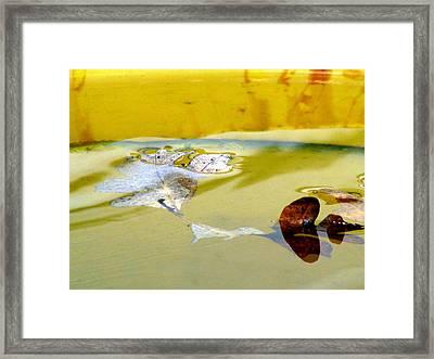 Floating In The Rain Barrel Framed Print by Selma Glunn