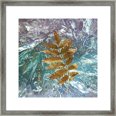 Floating On Ice Framed Print by Barbara St Jean