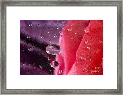 Floating Through Framed Print by Sandra Clark