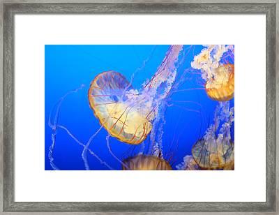Floating Framed Print by Tony Boyajian