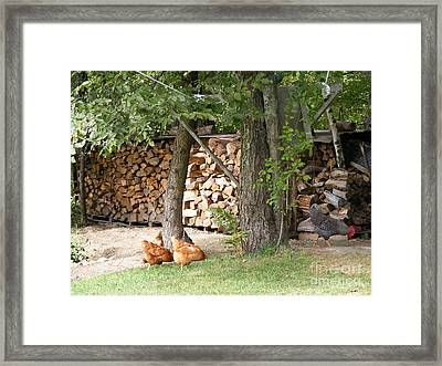 Flock At The Woodpile In The Evening Framed Print by Susan Russo