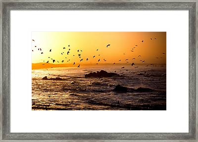 Flock Of Seagulls Fishing In Waves Framed Print by Panoramic Images