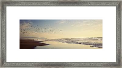 Flock Of Seagulls Flying Above A Woman Framed Print by Panoramic Images