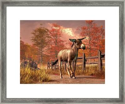 Flop Eared Donkey Framed Print by Daniel Eskridge